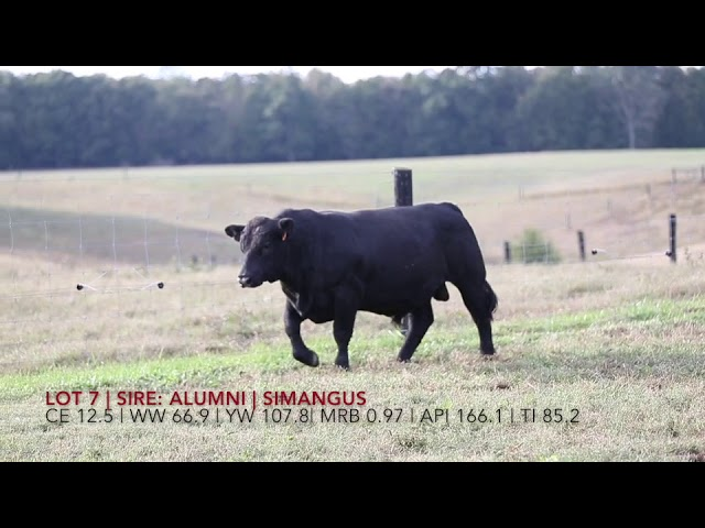 Edgewood Angus Lot 7