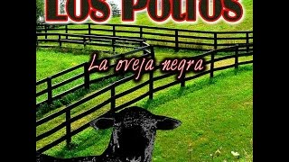 los potros la oveja negra