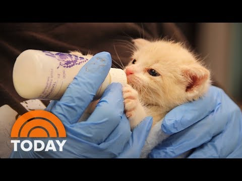 Animal Shelter In New York City Hopes To Inspire No-Kill Movement | TODAY