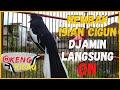 Suara Pancingan Poci Kacer Gacor Ngeplong Nembak Isian Cigun Djamin Langsung On Dor  Mp3 - Mp4 Download