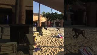 Секс на пляже СанСити в ЮАР #юар #африка #секс #приколы #юмор
