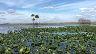 Airboat Ride Lone Cabbage 12/28/2014