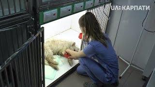 Собака, яка вчора впала з балкону, отримала перелом тазу