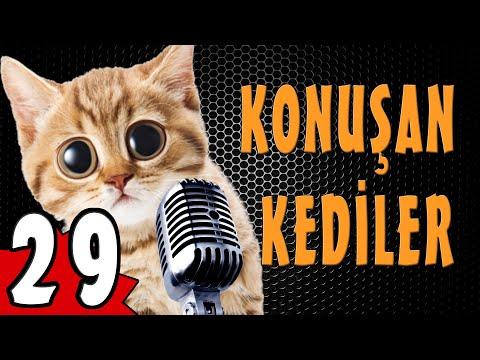 Konuşan Kediler 29 - En Komik Kedi ları
