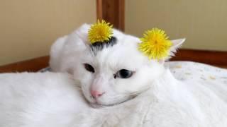 http://ameblo.jp/nosenekoshiro/entry-12274504064.html のせ猫オフィ...