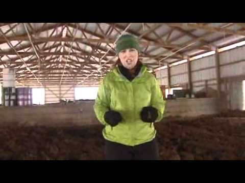 Composting Cow Manure to Generate Heat