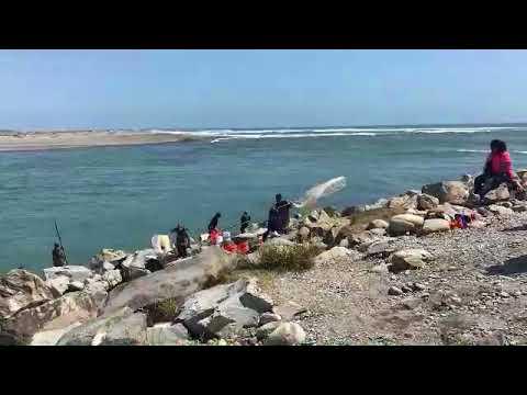 White bait run on the Hokitika river  12- 11- 2017