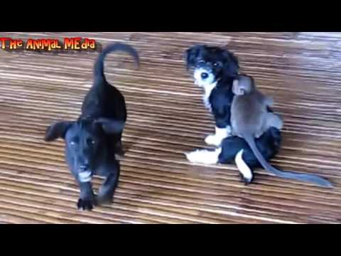 Amazing Monkey And Dogs friendship | cute Dog Friendship | True friendship | best friends animal