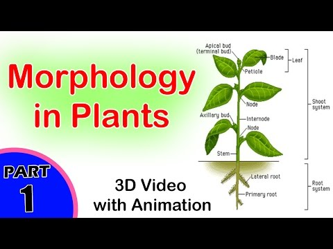 Morphology in Plants | Morphology in Biology | CBSE Biology Class XI | +1 Biology