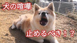 犬の問題行動のご相談は ホームページ ドッグスクールポチパパ https://...