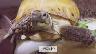 거북이 ASMR 을 찍고 싶었다.