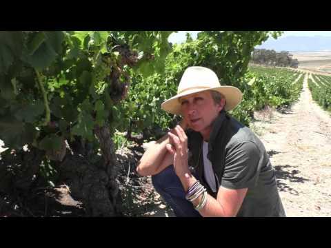 Rosa Kruger on Old Vines in the Swartland