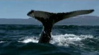 Amazing Iceland - Nature film including scenes from 2010 volcano eruption.