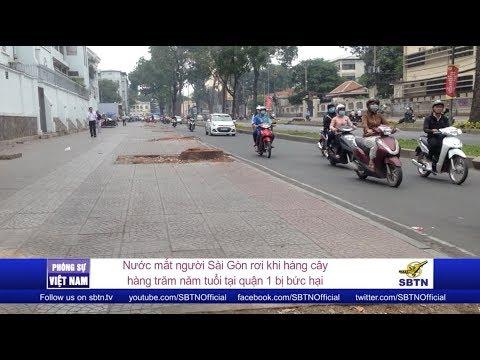PHÓNG SỰ VIỆT NAM: Người Sài Gòn tiếc thương những hàng cây trăm năm tuổi bị đốn hạ