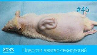 #46 Новости аватар-технологий / Российский экзоскелет / Роботизированное инвалидное кресло etc.(, 2016-02-01T15:41:47.000Z)