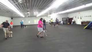 Alden's Kennels Dog Training & Dog Boarding Chicago Il.