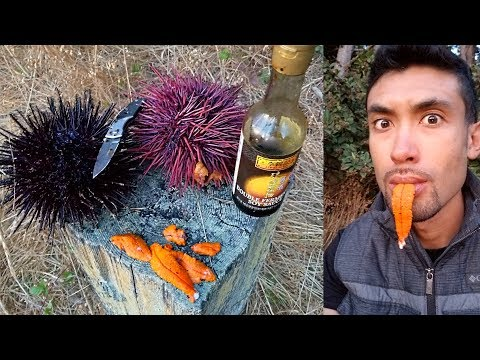 CATCH AND COOK Spiny Sea Urchin!!! (UNI)