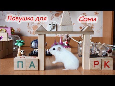 видео: Сказка про джунгарских хомяков.
