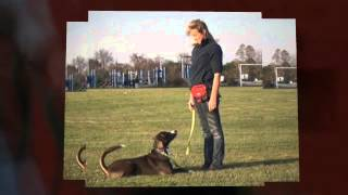 Dog Training Services In Newtown, Pa - Bob's Pet Stop, Inc.