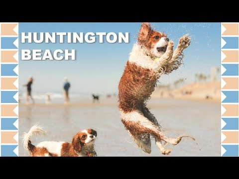 Huntington Dog Beach Review | Dog Friendly Southern California