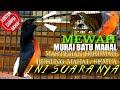 Murai Batu Mewah Isian Mahal Cucak Rowo Cucak Emas Papua  Mp3 - Mp4 Download