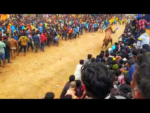 Alur Dinnur Festival 17/01/2021
