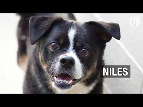 Portland-area pets for adoption Oct. 3