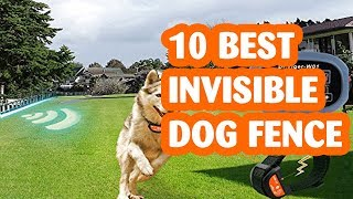 10 Best Invisible Dog Fences The Best Invisible Dog Fence in 2018