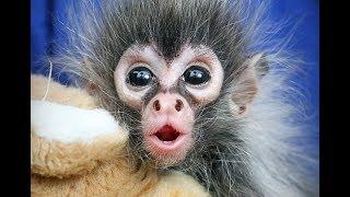 CUTEST MONKEY  - Best of Cute Monkeys Videos Ever