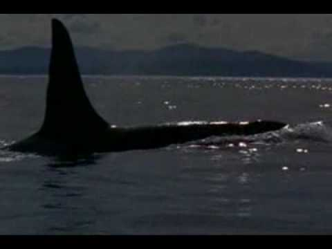 michael jackson will you be there (free willy)