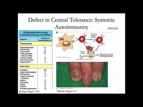 Immunology Fall 2019 Lecture 27: Peripheral Tolerance/Autoimmunity 1