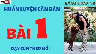 Huấn Luyện Cơ Bản l Huấn Luyện Chó C๐n Ham Mồi Bài 1 l Bằng Đoàn TB