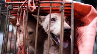 Туристам на Бали, возможно, продают мясо собак под видом курятины или говядины (новости)