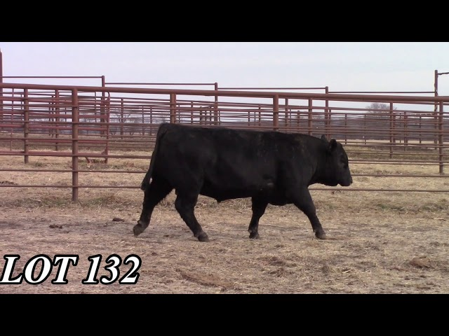 Mead Angus Farms Lot 132