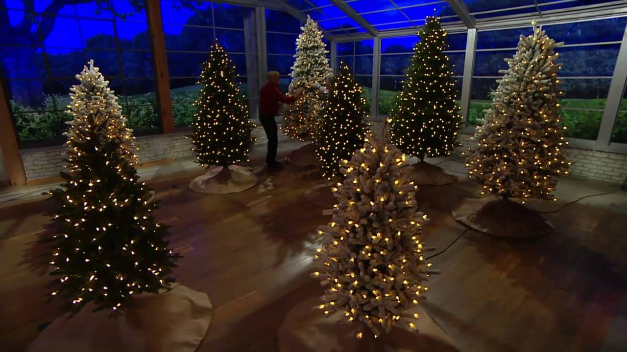 santas best balsam fir christmas tree with rgb 20 technology on qvc