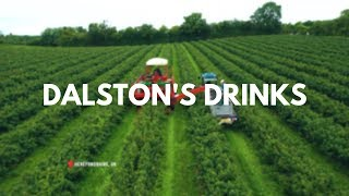 Dalstons Drinks - Blackcurrant Farm