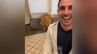Top Funny Pet Videos Лучшие смешные видео с домашними животными