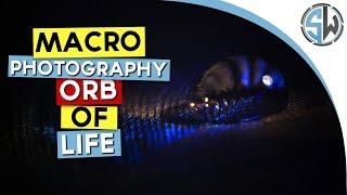 Macro photography - Orb of life