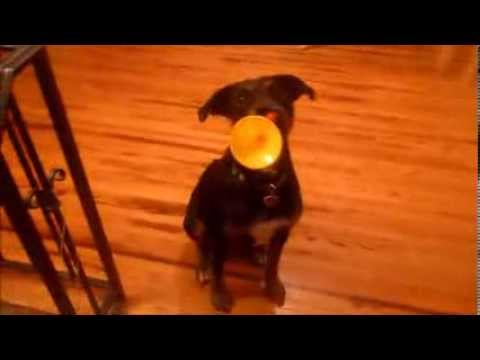 Useless Dog Trick: Play The Trumpet