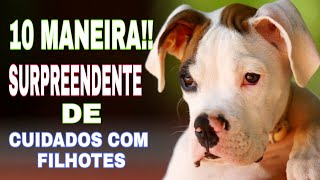 10 Maneira Surpreendente!!Como Cuidar De Um Cachorro Filhote