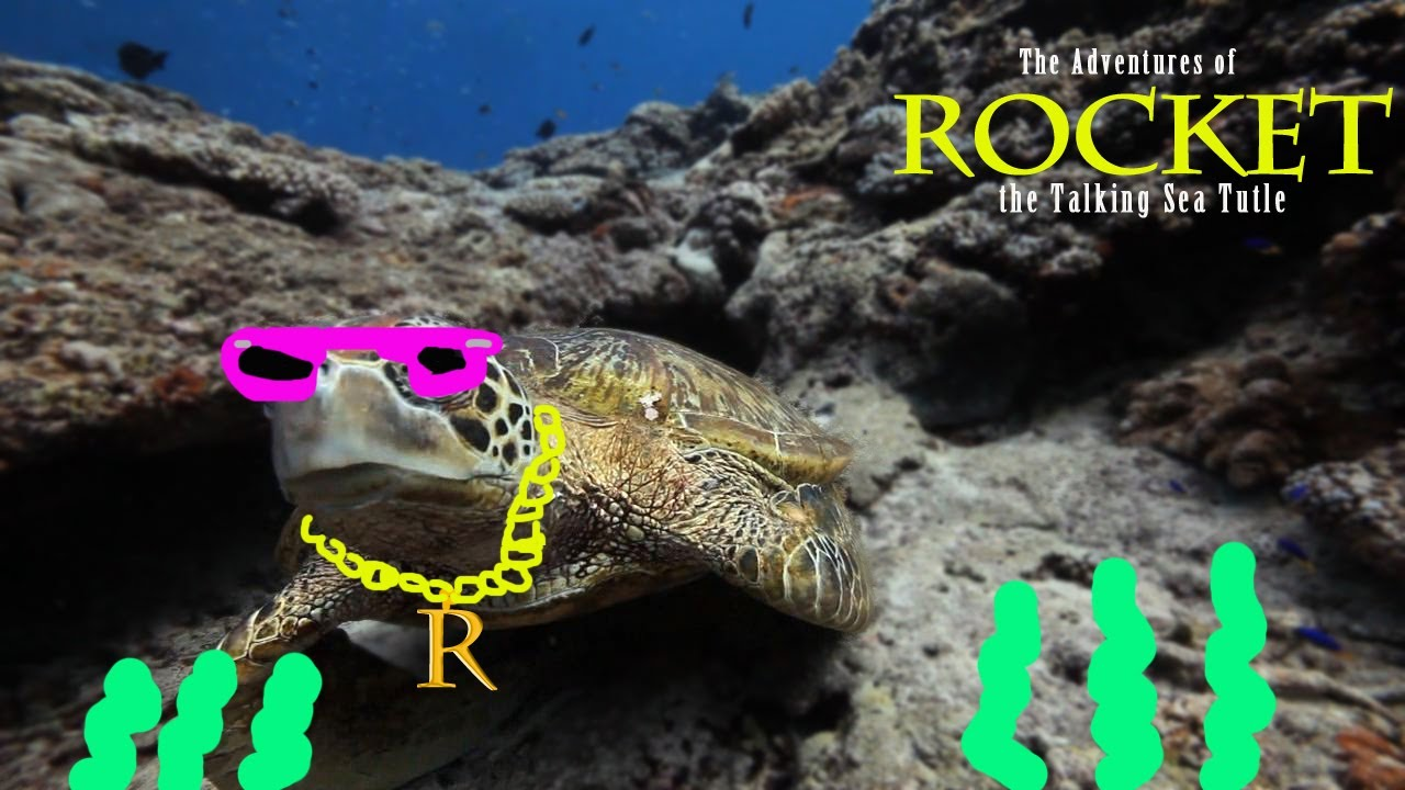 funny talking animals underwater rocket the sea turtle youtube