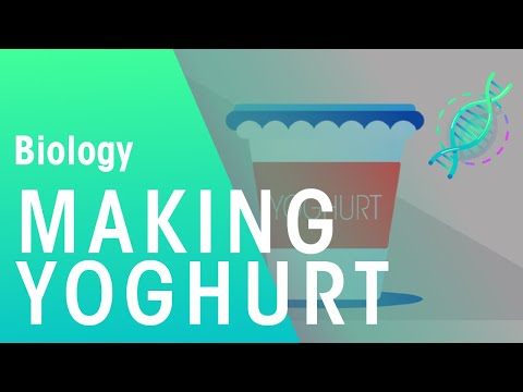 Making Yoghurt | Health | Biology | FuseSchool