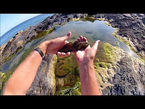 Shore Fishing - Ultra Light (LRF) Rock and Rock Pool Lure Fishing Fun