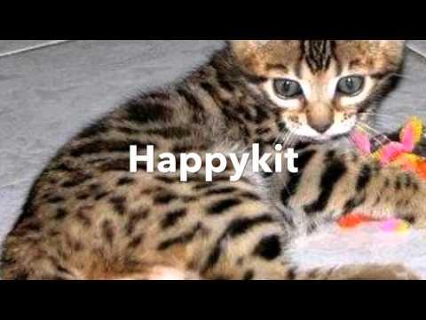 My Top Ten Least Favorite Warrior Cat Names