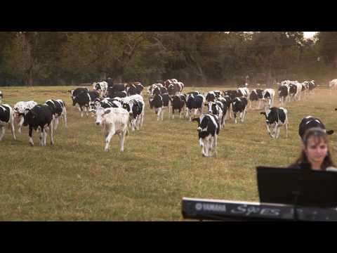 Florida Dairy Farmer Holds Concert for Dairy Cows