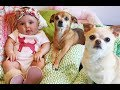 Little Chihuahua dog 🦊🦊 make fun time with best friend Babies human 🦊 👶Cute dog and baby videos