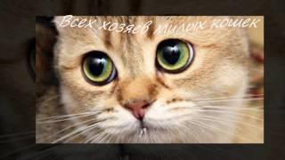 МЯУ МЯУ котики. День кошек. Видео открытки.