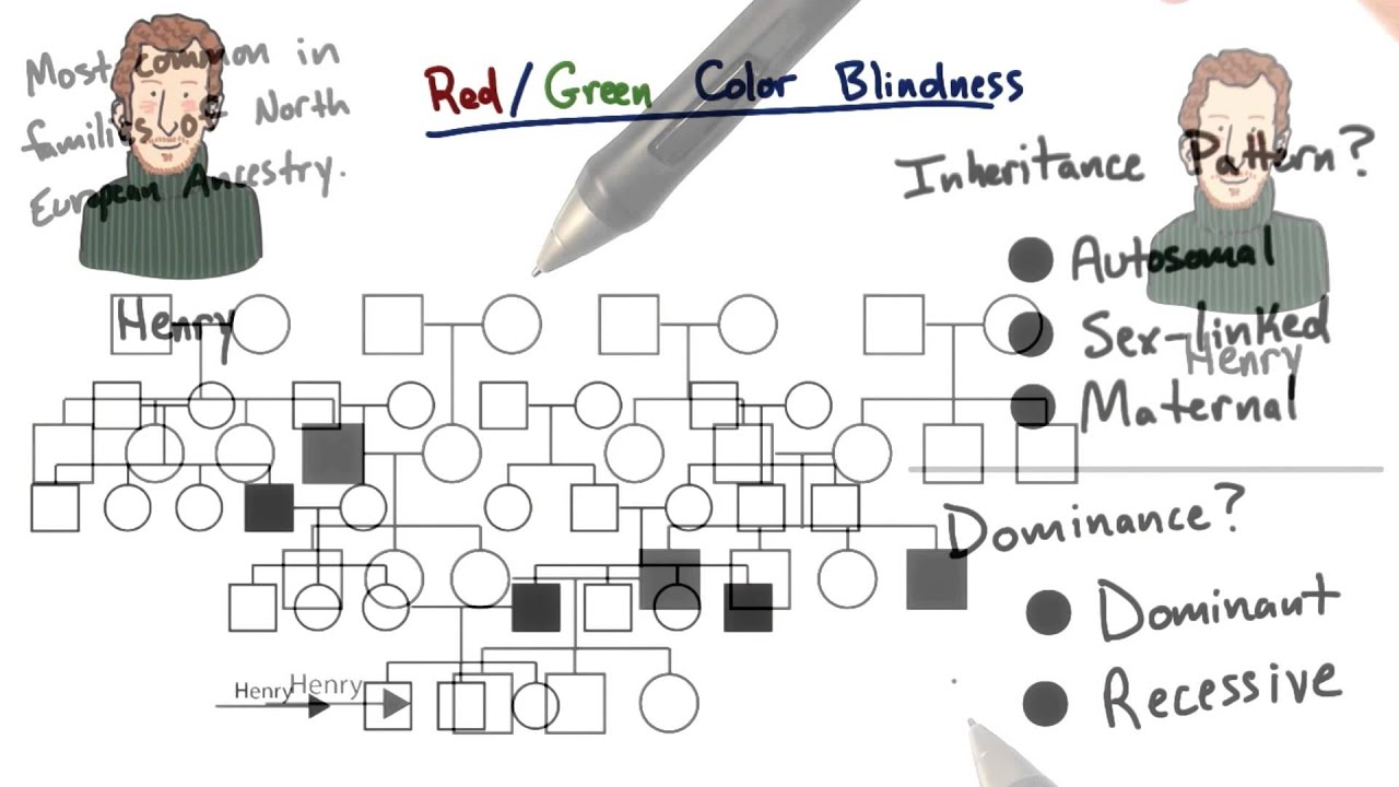 Red green color blindness tales from the genome youtube red green color blindness tales from the genome geenschuldenfo Images