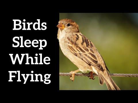 How Do Birds Sleep While Flying? - A Cool Sleep Trick