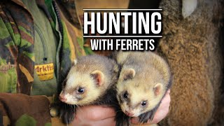 Hunting with Ferrets | TAOutdoors